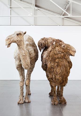 Ludwig Forum Aachen, Nancy Graves, Kenia-Dromedar und Mongolisches Trampeltier